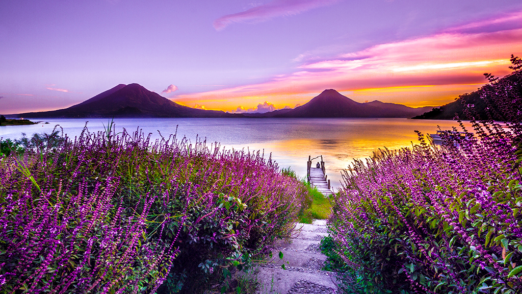Purple mountains and yellow-purple sea scene with beautiful purple flowers under a purple, pinkish, bright sky