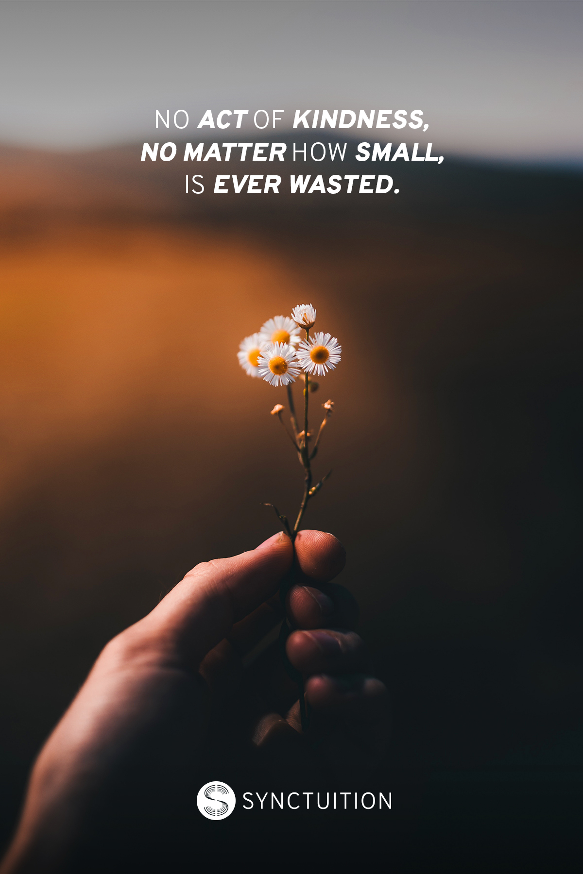 A hand holding a daisy with the quote