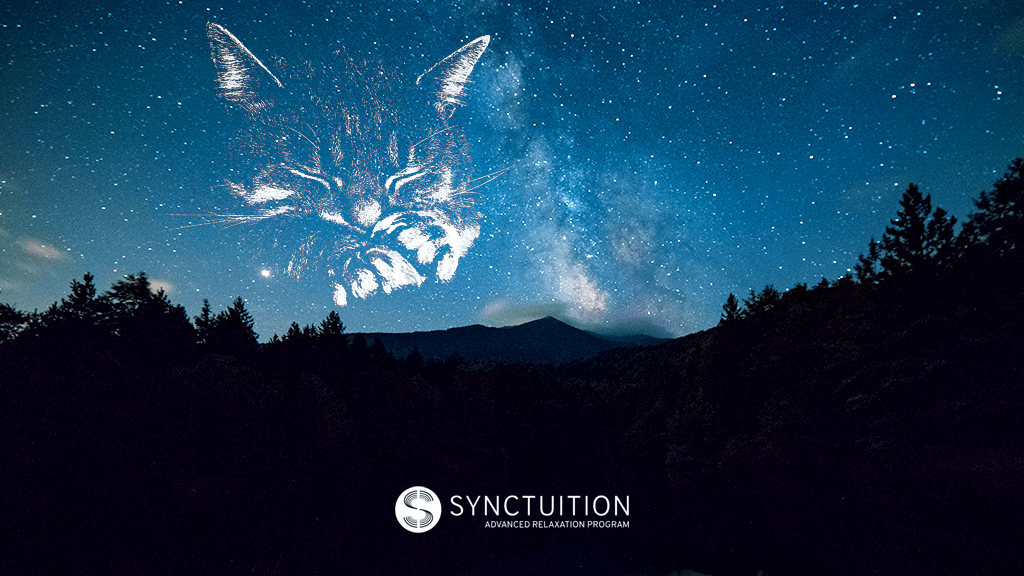 Cat constellation in the sky with synctuition's logo