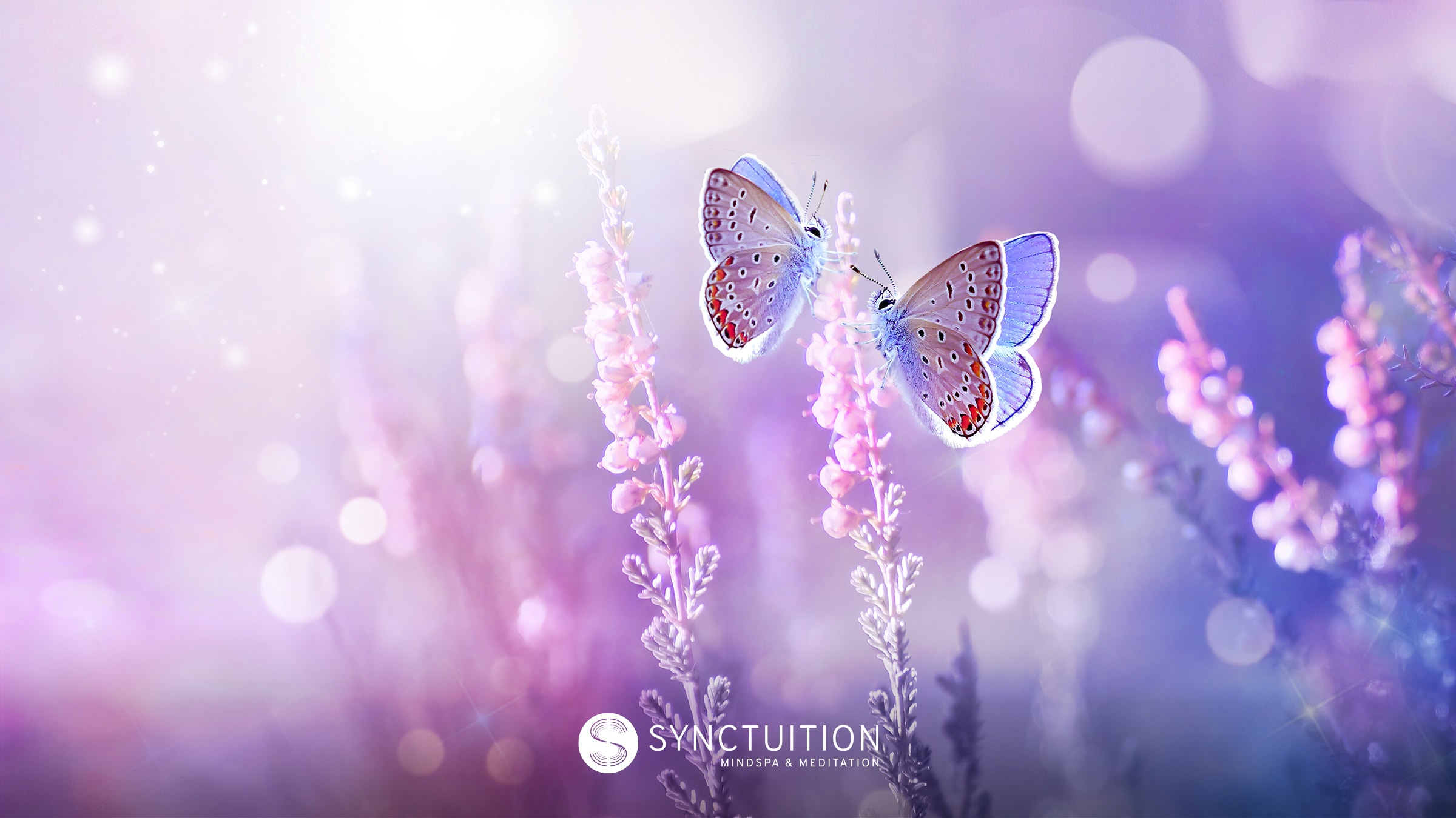 Mindful exercise for children with anxiety: picture a butterfly flying over a field.